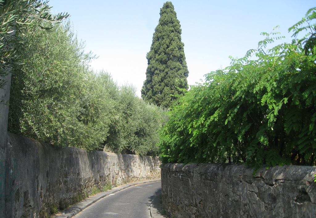 La Via san Leonardo, dans le centre-ville de Florence