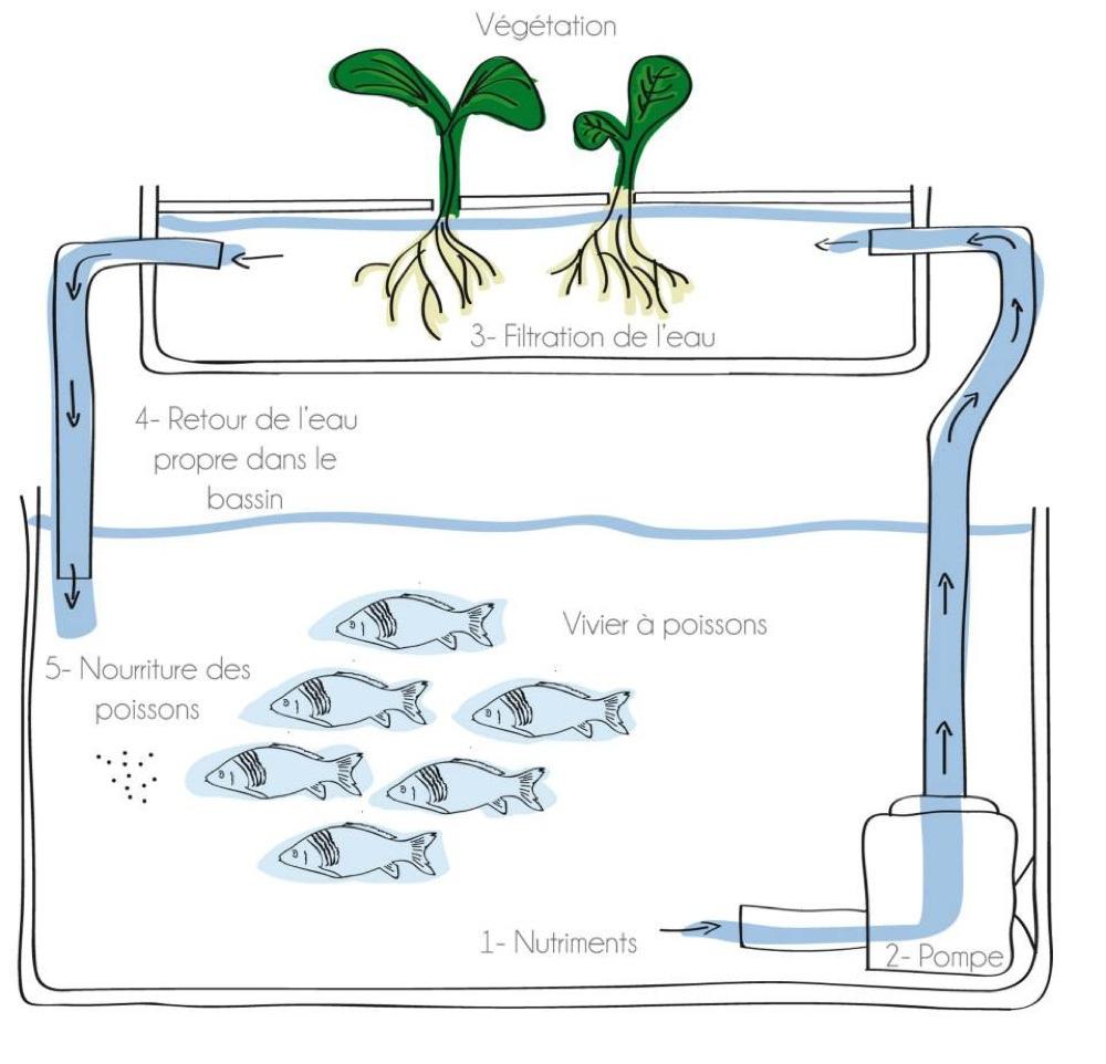 Le projet de ferme aquacole des lauréates du concours 2013